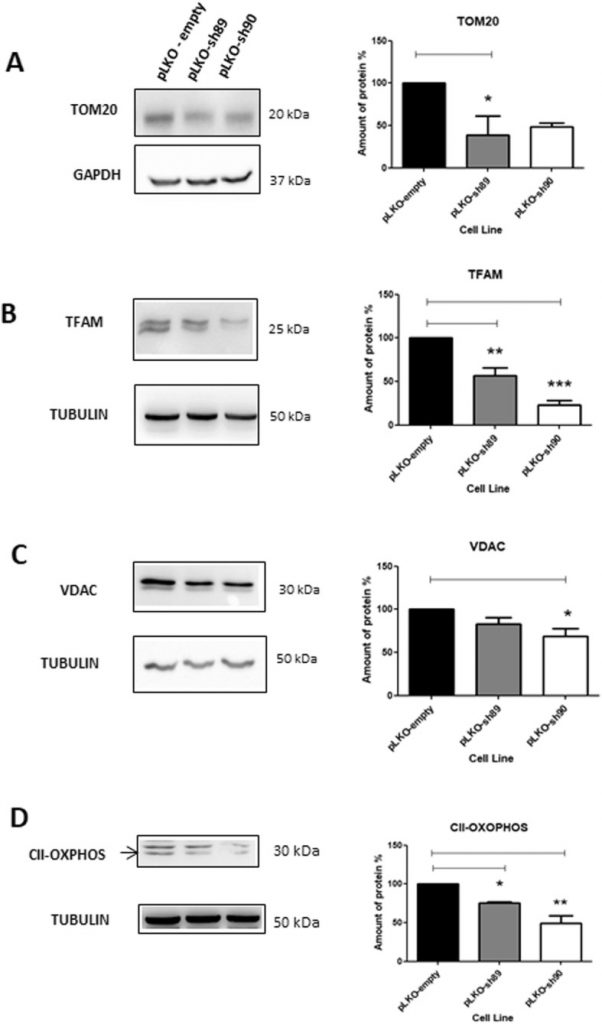 NEK10 interactome and depletion reveal new roles in mitochondria.